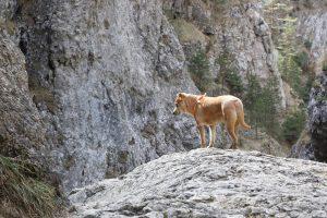 2017-03-25-prosiecka-dolina-300x200