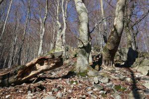 2017-03-28-sutovska-dolina-300x200