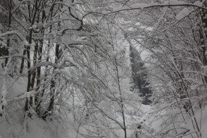2019-01-03-sutovska-dolina-300x200