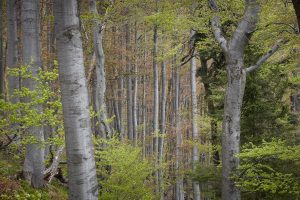 2020-05-30-sutovska-dolina-300x200
